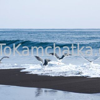 Kamchatka. Pacific Ocean and Khalaktyrsky Beach