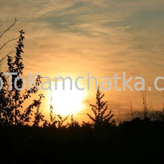 Kamchatka. Dead forest. Tours to Kamchatka. Sunset