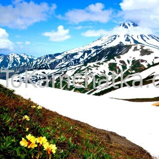 Kamchatka. Vilyuchinsky volcano and rhododendrons