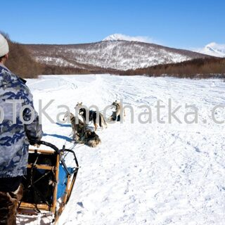 Kamchatka. Dog sledding