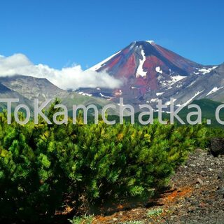 Kamchatka. Avachinsky volcano in summer