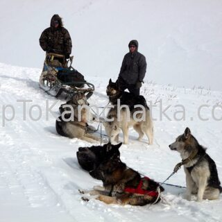 Kamchatka. Dog sledding expedition