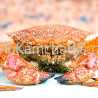 Kamchatka. Crab