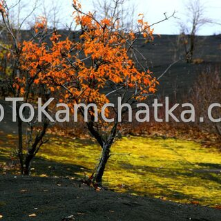 Kamchatka. Slag field. Tours to the Tolbachik vale