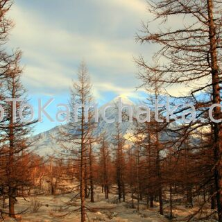 Kamchatka. Ostry Tolbachik volcano. Tours to the Plosky Tolbachik